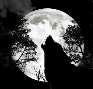 Silhuetten av en varg som ylar mot månen