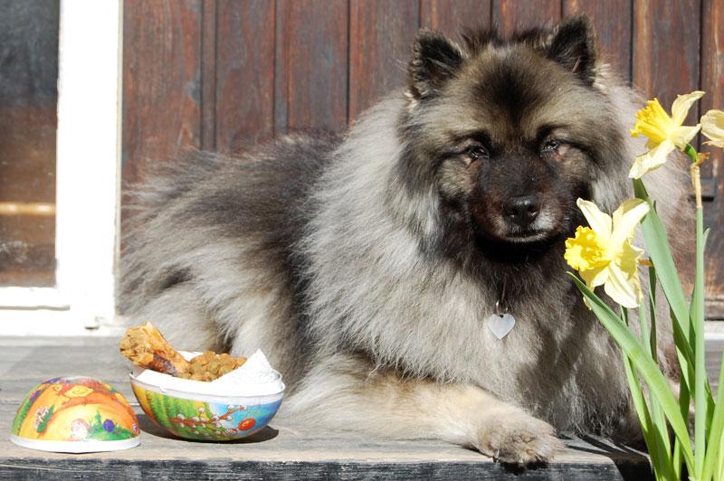 Silva ligger ner med påskliljor till höger och tillvänster ett påskägg fyllt med hundgodis.