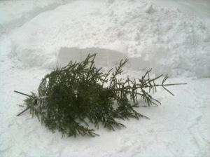 Gran som ligger i snön