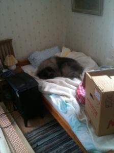 Bäddad säng med sovande hund